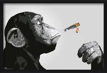 Uokvireni plakat Steez - Monkey Smoking