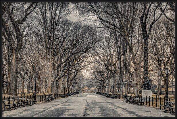 Assaf Frank - New York Central Park Poster